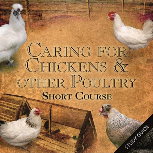 Caring for Chickens and Other Poultry - Short Course